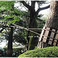 兼六園-松樹.JPG