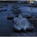鴨川-黃昏大烏龜跳石.JPG