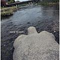 鴨川-想出遊的烏龜.JPG