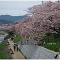 鴨川-櫻花下.JPG