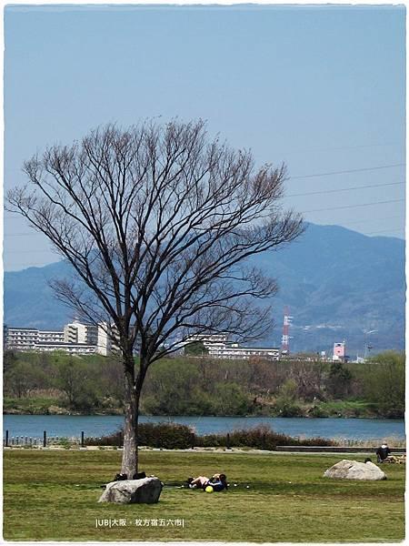 枚方宿-淀川枯樹.JPG