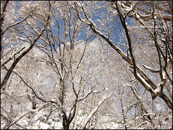 羊蹄山-天空樹.JPG