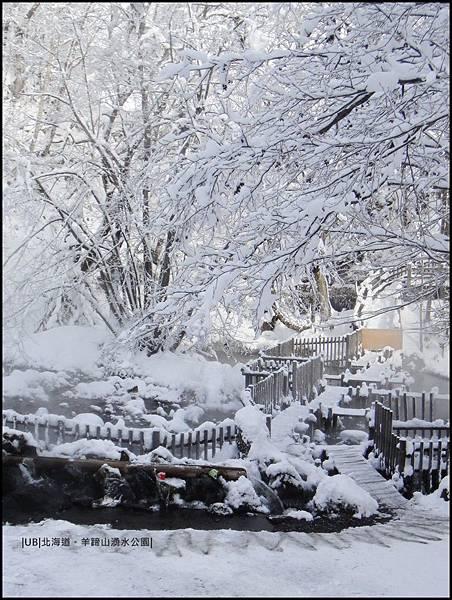 羊蹄山-階梯樹.JPG