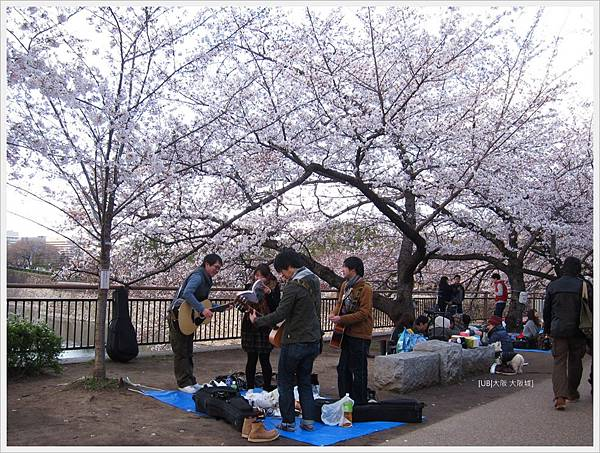 大阪城-櫻花樹下吉他唱遊.JPG