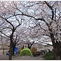 大阪城-櫻花樹下帳篷.JPG