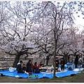 大阪城-櫻花樹下圍爐.JPG