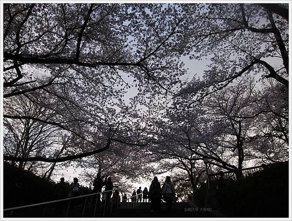 大阪城-櫻花樹向陽.JPG