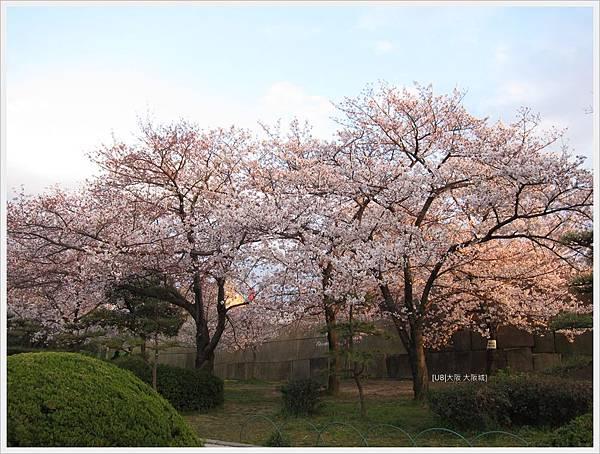 大阪城-夕照下櫻花樹.JPG