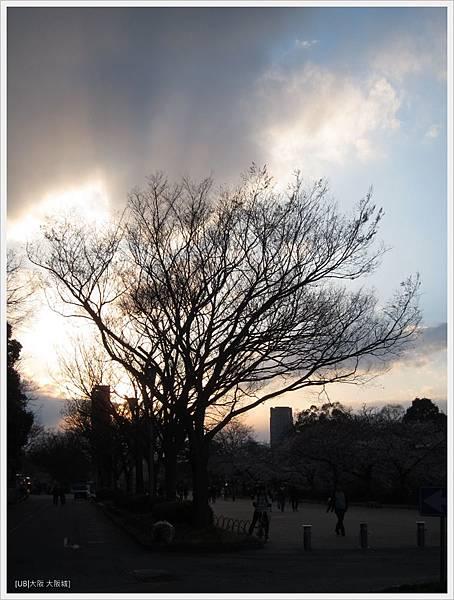 大阪城-火燒樹.JPG
