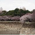 大阪城-城牆上櫻花.JPG