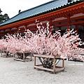 平安神宮-結繩木.JPG