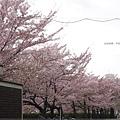 平安神宮-街道.JPG
