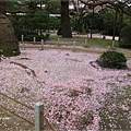 平安神宮-櫻花地面.JPG