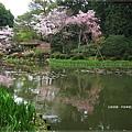 平安神宮-中神苑.JPG