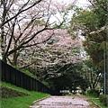 疏水道-櫻花道.JPG