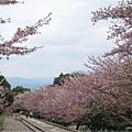 疏水道-鐵道兩旁櫻花.JPG