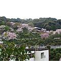 疏水道-鐵道遠處景色.JPG