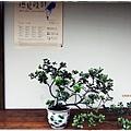 珍珠茶屋-緣廊盆栽.JPG