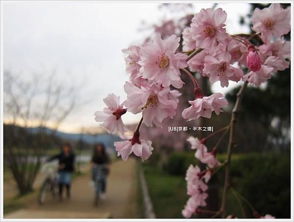 半木之道-櫻花特寫.JPG