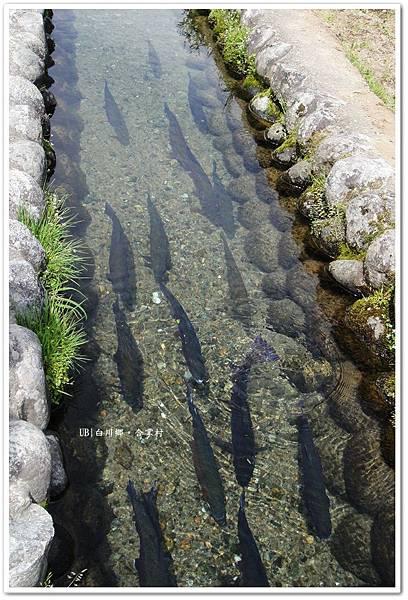 白川鄉合掌村-清澈水源.JPG
