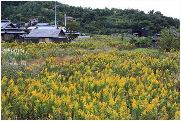 豐島-鄉村風景.JPG