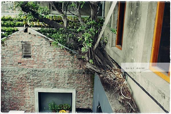 綠光計劃-2樓-牆外樹.JPG