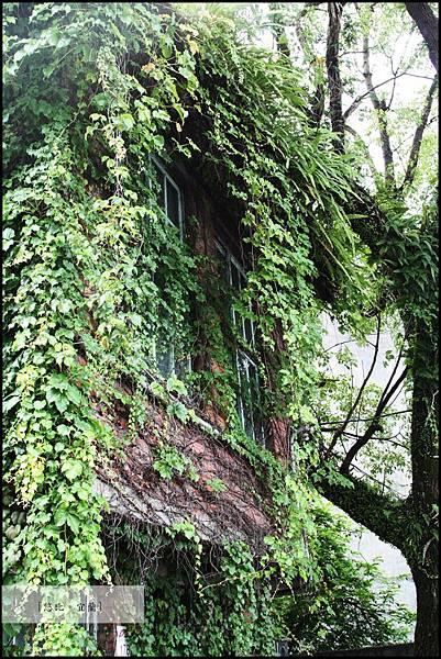 宜蘭-綠屋.JPG