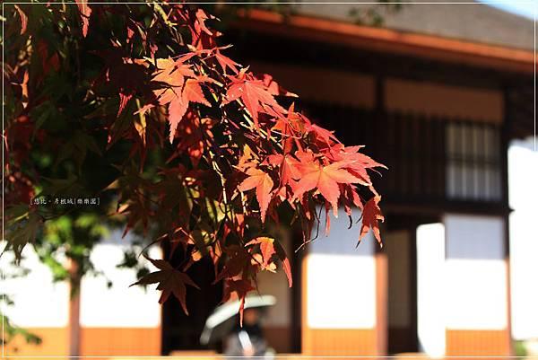 彥根城-樂樂園-2.JPG