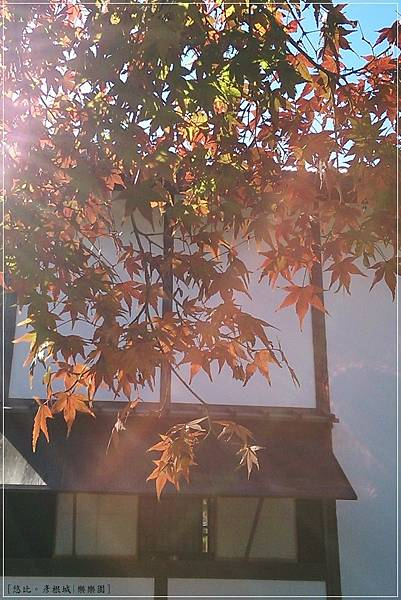 彥根城-樂樂園-3.jpg