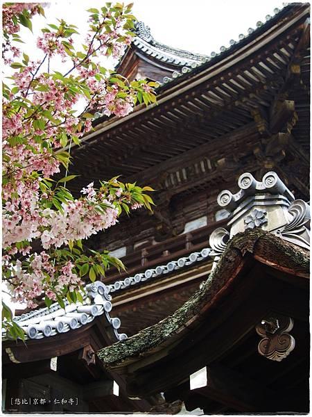 仁和寺-二王門前櫻花.JPG