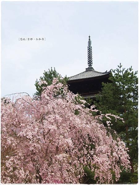 仁和寺-垂櫻+五重塔-1.JPG