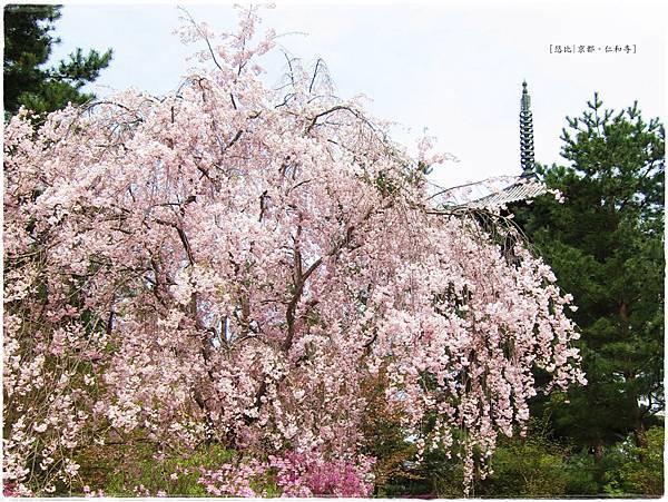 仁和寺-垂櫻+五重塔-2.JPG