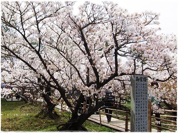 仁和寺-御室櫻園-1.JPG