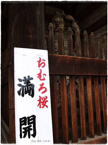 仁和寺-滿開看板.JPG