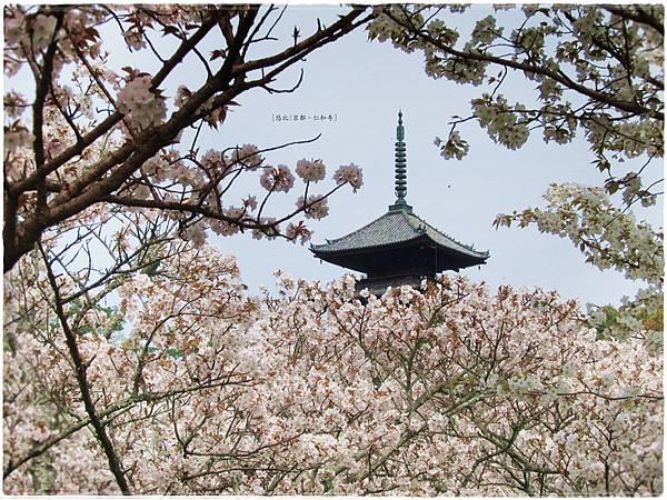 仁和寺-櫻+五重塔-1.JPG