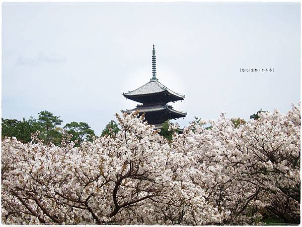 仁和寺-櫻+五重塔-2.JPG