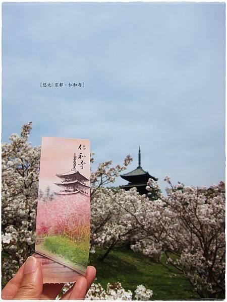 仁和寺-櫻+五重塔-門票.JPG