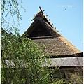 常照皇寺-方丈的茅草屋頂.JPG