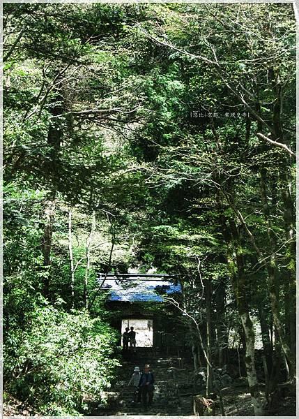 常照皇寺-綠樹聳天.JPG