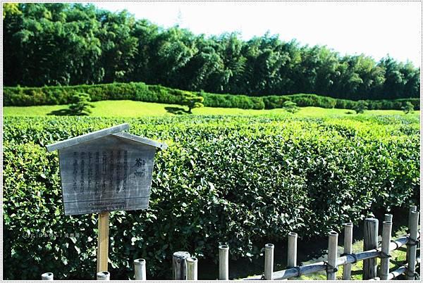 後樂園-茶園.JPG