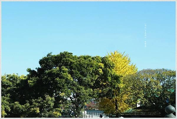 後樂園-路邊銀杏.JPG