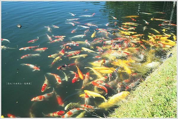 後樂園-鯉魚.JPG