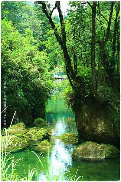 杉林溪-碧綠池水-4.JPG