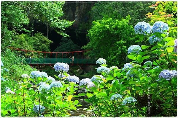 杉林溪-瀑-紫陽花-12.JPG