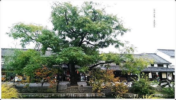 美觀-川邊建築-樹.jpg