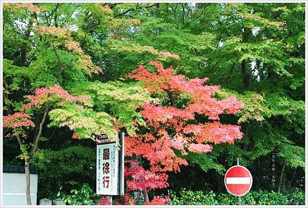 天橋立-紅葉.JPG