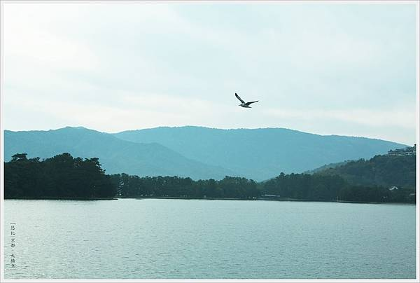 天橋立-海鳥-1.JPG
