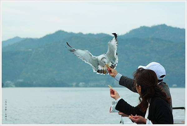 天橋立-海鳥餵食-2.JPG