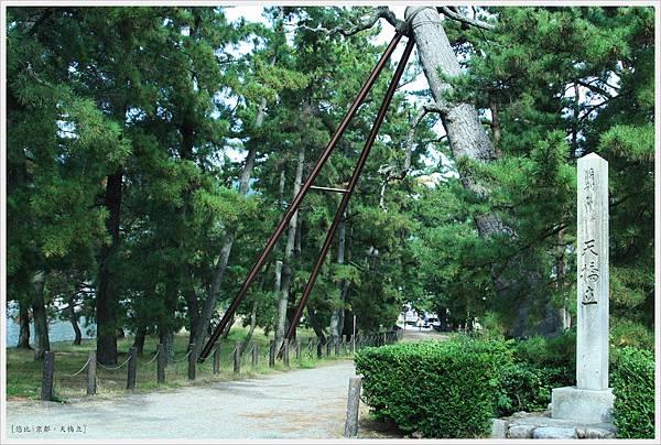 天橋立-散步道-1.JPG