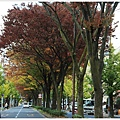 京都-一乘寺-白川通-1.jpg